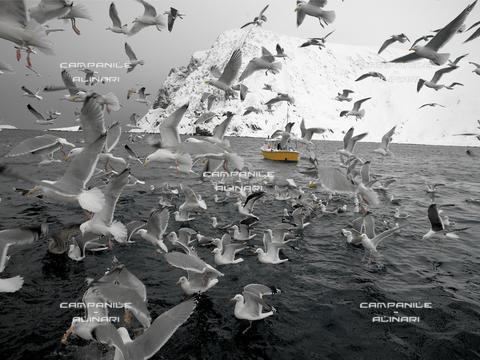 AAC-F-009392-0000 - Norvegia inv 1277  Pesca al merluzzo nei pressi dell'abitato di Sorvaer-Isola di Soroya