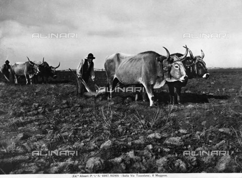 ACA-F-006997-0000 - Plowing a field in the area of Via Tuscolana in Rome
