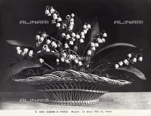 ACA-F-016025-0000 - Mughetti in una cesta di vimini - Data dello scatto: 1890 ca. - Archivi Alinari, Firenze