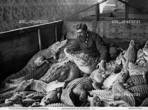 ACA-F-016203-0000 - Portrait of a man amongst alligators and caymans in the Indo-African Aquarium in Florence