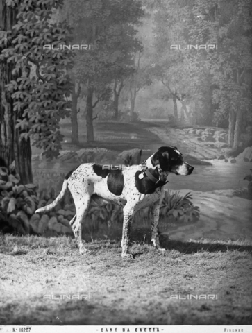 ACA-F-016207-0000 - A portrait of a dog with a false landscape in the background