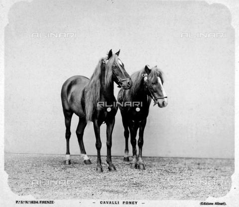 ACA-F-016214-0000 - Ponies