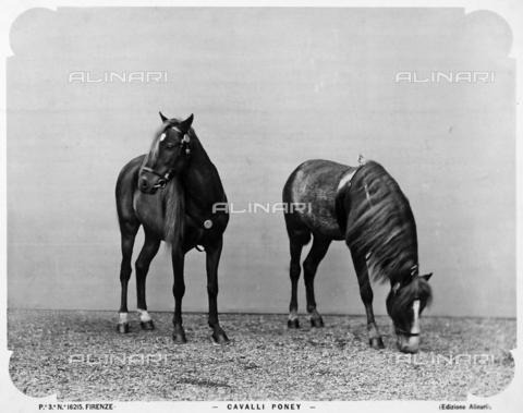 ACA-F-016215-0000 - Two ponies