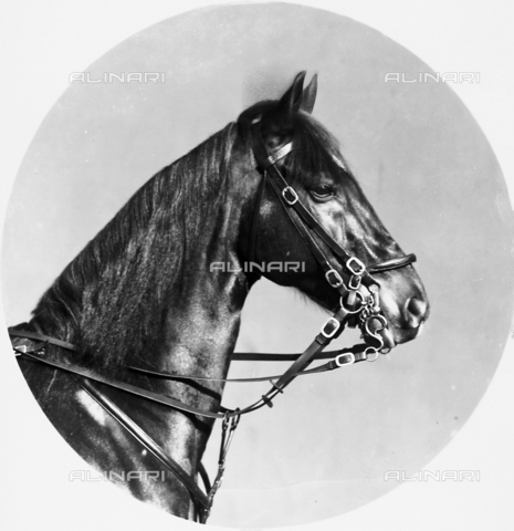 ACA-F-016217-0000 - Horse's head