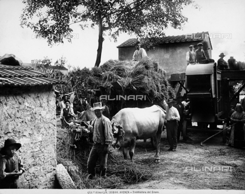ACA-F-030844-0000 - Threshing grain in Avenza near Carrara