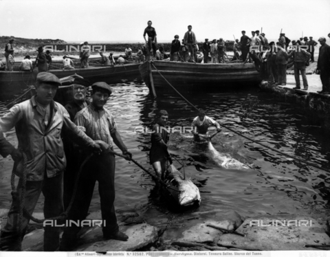 ACA-F-032582-0000 - Fishermen fishing for tuna, called tunny fishing, along Porto Torres.