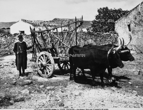 ACA-F-032593-0000 - Cart for transporting grain, pulled by two oxen with a farmer on the side, photographed in a farm in Tratalias, Sardinia.