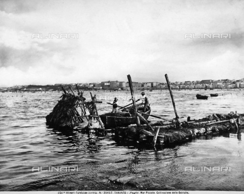 ACA-F-035457-0000 - Two men on boats in the act of fishing oysters in the Mar Piccolo. In the background is a view of the city of Taranto.