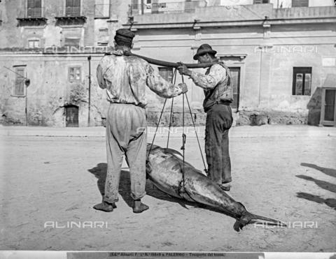 ACA-F-19849A-0000 - Due uomini trasportano un tonno appena pescato. Palermo