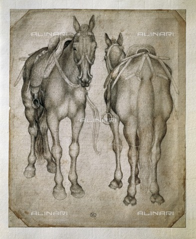 AIS-F-097166-0000 - Studio for two horses, drawing, Pisanello (said), Antonio di Puccio Pisano (before 1395-1455), Musée du Louvre, Paris - Iberfoto/Alinari Archives, BeBa