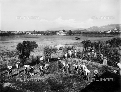 APA-F-012325-0000 - Patients at the Psychiatric Hospital of San Salvi, in Florence at work in the fields surrounding the institute