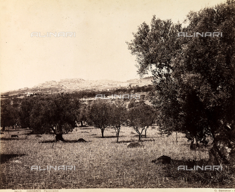 AVQ-A-000003-0013 - View of an olive grove on the outskirts of Agrigento; a panorama of the city is visible in the background - Data dello scatto: 1870 - 1880 - Reteuna Collection / Archivi Alinari, Firenze