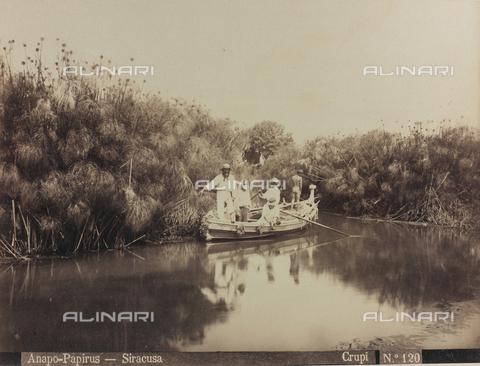 AVQ-A-000003-0035 - Il fiume Anapo a Siracusa con le piante di papiri - Data dello scatto: 1880-1890 - Archivi Alinari, Firenze