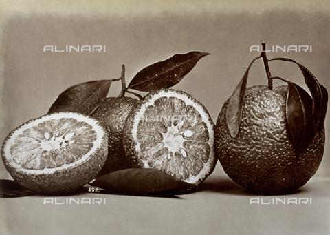 AVQ-A-000071-0084 - Primo piano di alcune arance; di uno dei frutti, tagliato a metà, si vede l'interno - Data dello scatto: 1885 ca. - Archivi Alinari, Firenze