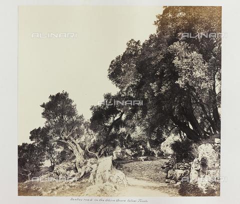 AVQ-A-000089-0034 - Photographic pictures of Rome: bosco di olivi nei pressi di Tivoli - Data dello scatto: 1862 - Raccolte Museali Fratelli Alinari (RMFA), Firenze