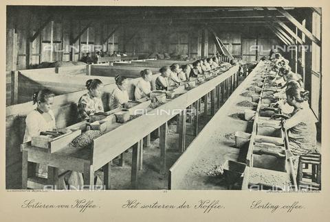 AVQ-A-000097-0008 - Interno di una fabbrica di caffè. In primo piano giovani donne che selezionano semi - Data dello scatto: 1912 ca. - Archivi Alinari, Firenze