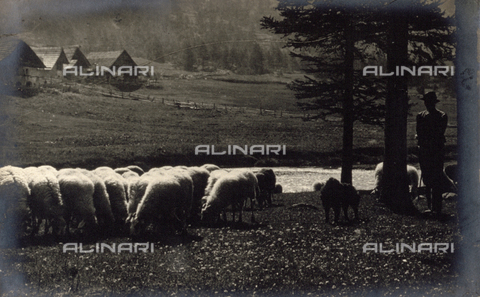 AVQ-A-000205-0008 - Shepherd with a flock of sheep - Date of photography: 1931 ca. - Fratelli Alinari Museum Collections, Florence