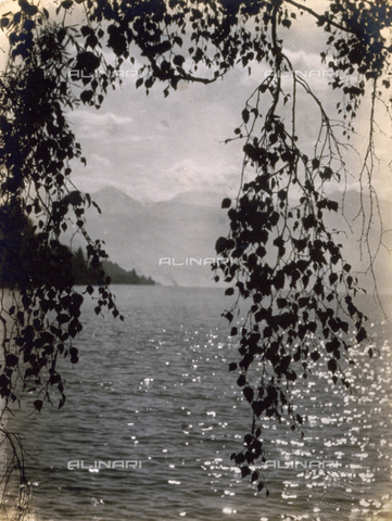 AVQ-A-000205-0013 - Panorama of a lake; in the foreground, the foliage of a tree - Date of photography: 1931 ca. - Fratelli Alinari Museum Collections, Florence