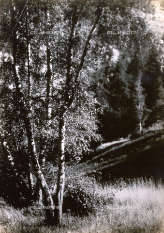 AVQ-A-000205-0014 - View of a clearing in a wood - Date of photography: 1931 ca. - Fratelli Alinari Museum Collections, Florence