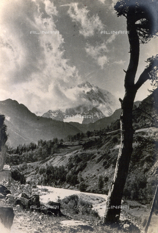 AVQ-A-000205-0017 - A lush mountain slope, in the background a snow-covered mountain peak is half hidden by a cloud. In the foreground the trunk of a tree - Date of photography: 1931 ca. - Fratelli Alinari Museum Collections, Florence