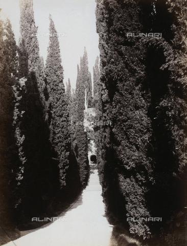 AVQ-A-000225-0055 - Viale alberato del giardino di Palazzo Giusti a Verona - Data dello scatto: 1875 ca. - Archivi Alinari, Firenze