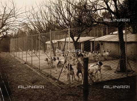 AVQ-A-000443-0046 - Hunting dogs inside an enclosure of the garden of Villa Zina, former Villa Giulia in Bellagio on the Lake Como. - Data dello scatto: 1915 ca. - Archivi Alinari, Firenze