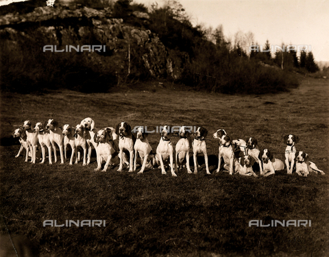 AVQ-A-000443-0051 - Group of hunting dogs photographed in the garden of Villa Zina, former Villa Giulia in Bellagio on the Lake Como. - Data dello scatto: 1915 ca. - Archivi Alinari, Firenze