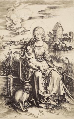 AVQ-A-000493-0044 - Madonna col Bambino e scimmietta: incisione di Albrecht Durer - Data dello scatto: 1861 - Archivi Alinari, Firenze