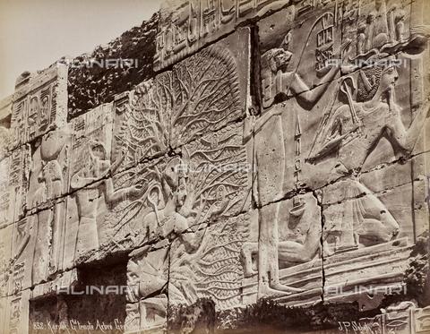 AVQ-A-000523-0047 - Albero e divinità, rilievi sul muro del tempio di Karnak, Egitto - Data dello scatto: 1880 - 1890 - Raccolte Museali Fratelli Alinari (RMFA), Firenze