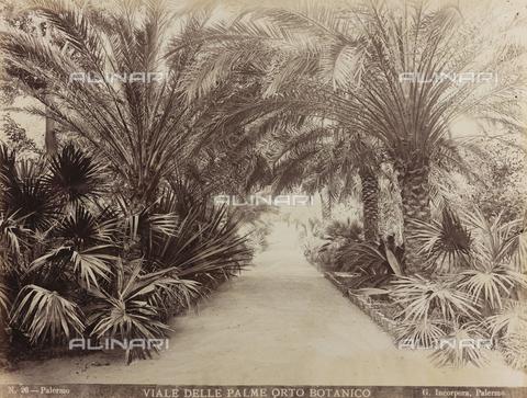 AVQ-A-000570-0030 - Il Viale delle Palme nell'Orto botanico di Palermo - Data dello scatto: 1880-1890 - Raccolte Museali Fratelli Alinari (RMFA), Firenze