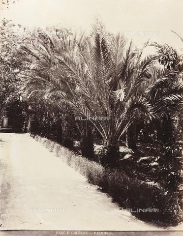 AVQ-A-000570-0044 - Palme nel Parco d'Orléans a Palermo - Data dello scatto: 1900 ca. - Raccolte Museali Fratelli Alinari (RMFA), Firenze