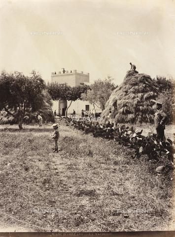 AVQ-A-000570-0046 - Veduta della vaccheria nel Parco d'Orléans a Palermo - Data dello scatto: 1900 ca. - Raccolte Museali Fratelli Alinari (RMFA), Firenze
