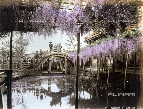 AVQ-A-001344-0053 - View of a picturesque pond enlivened with trellised Wisteria in the Kameido district of Tokyo. In the background a wooden bridge crosses the reflecting pond.