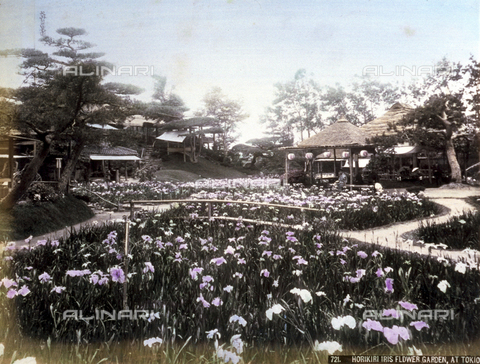 AVQ-A-001344-0054 - View of the beautiful iris garden of Horikiri in Tokyo. In the foreground, a flower bed planted with the delicate violet flowers; in the background, numerous pavilions decorated with the characteristic Japanese lanterns.