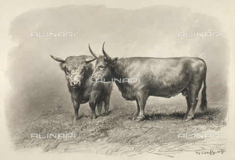 AVQ-A-001659-0019 - West-Highland cows participating in the 1856 Paris World's Agricultural Fair - Date of photography: 1856 - Fratelli Alinari Museum Collections, Florence