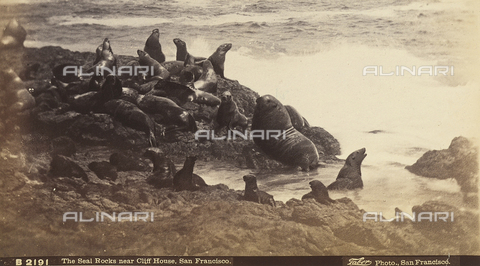 AVQ-A-003896-0024 - View of Seal Rocks near Cliff House, San Francisco