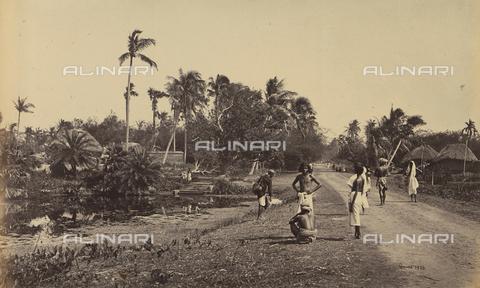 AVQ-A-004121-0009 - Scorcio della strada che porta da Calcutta a Diamond Harbor, in India - Data dello scatto: 1863-1870 ca. - Raccolte Museali Fratelli Alinari (RMFA), Firenze