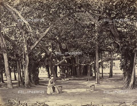 AVQ-A-004121-0012 - Ritratto di una giovane donna inglese in un grande parco dell'India - Data dello scatto: 1863-1870 ca. - Raccolte Museali Fratelli Alinari (RMFA), Firenze