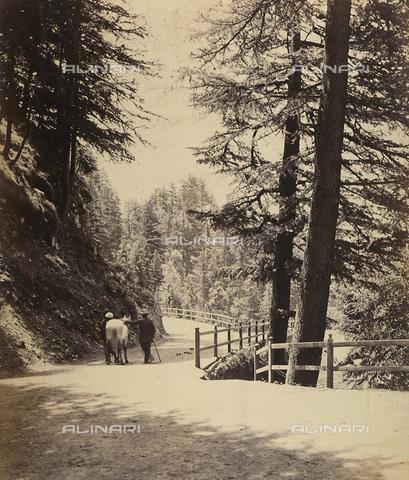 AVQ-A-004121-0065 - Scorcio panoramico dei dintorni della piccola città di Shimla, in India - Data dello scatto: 1863-1870 ca. - Raccolte Museali Fratelli Alinari (RMFA), Firenze