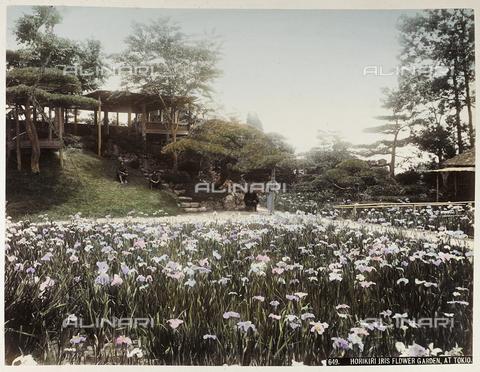 AVQ-A-004838-0025 - Horikiri iris garden in Tokyo