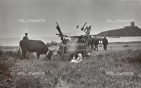 BAQ-F-001204-0000 - Contadini con carro e bue, Sardegna - Data dello scatto: 1900-1910 - Raccolte Museali Fratelli Alinari (RMFA), Firenze