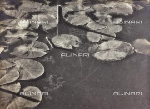 BCA-F-000198-0000 - Waterlilies - Data dello scatto: 1920-1930 - Archivi Alinari, Firenze