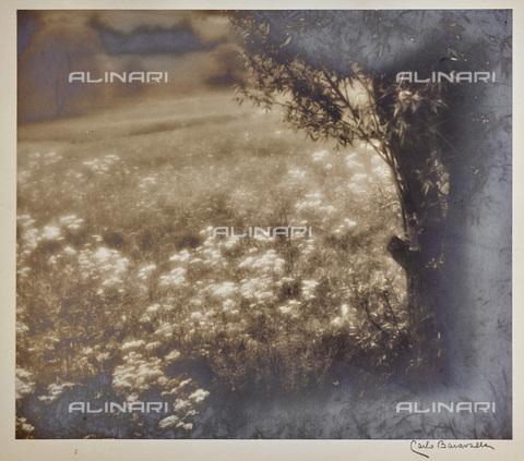 BCA-F-000207-0000 - Flowery field - Data dello scatto: 1920-1930 - Archivi Alinari, Firenze