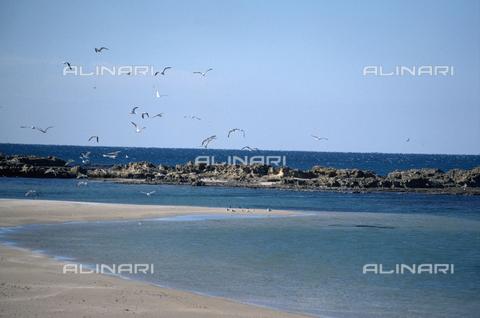 BEN-F-006247-0000 - Panoramica sulla costa con antichi ruderi, Dor (Dora), Mar di Cesarea, Tel Dor - Raffaello Bencini/Archivi Alinari, Firenze