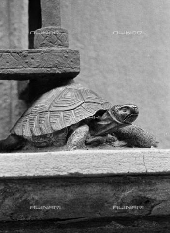 BEN-F-014737-0000 - Turtle, Raphael Curradi, Palazzo Fenzi-Marucelli, Florence - Raffaello Bencini/Alinari Archives, Florence