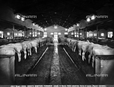 BGA-F-022594-0000 - Middle passage of an industrial stable in Jolanda di Savoia, province of Ferrara.