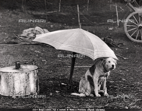 BGA-F-023005-0000 - A dog on the leash under a large umbrella in the middle of a wood clearing in the environs of Rome.
