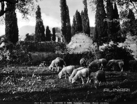 BGA-F-023078-0000 - A flock is grazing on a plain in the environs of Rome.