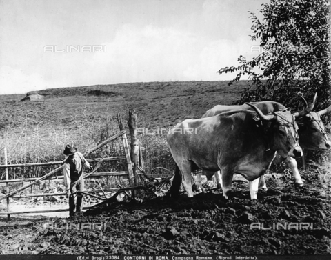 BGA-F-023084-0000 - In a field in the environs of Rome a farmer is leading a plow carried by two oxen.