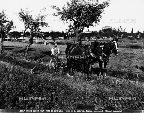 BGA-F-023239-0000 - Cortona (environs). Estate of S. Caterina. Plowing witrh horses